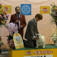 FCI中部インターナショナルドッグショー2012