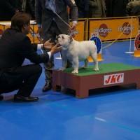 大阪インターナショナルドッグショーへ行ってきました!