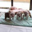 puppy725_mini
