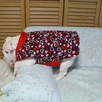 我が家のブルドッグにクリスマスプレゼント♡