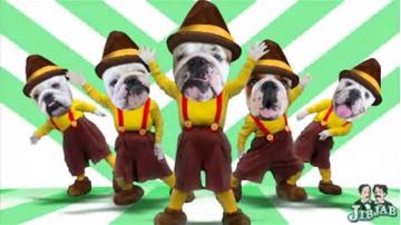 dm-bulldogs