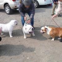大阪南白鷺ドッグクラブ展に行ってきました