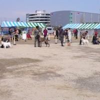 大阪南白鷺ドッグクラブー午後の部