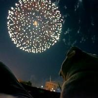 豊田の花火大会に行ってきました