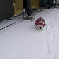 ヤッホーイ雪だよん♪