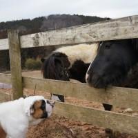 牧場に遊びに行きました
