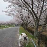 ぽかぽか春日和♪