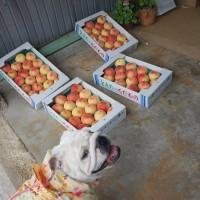 桃の季節です♡