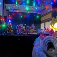 メリークリスマス♥♡(。→ω←。)♡♥