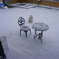 雪やこんこん (*>ω<*)♪♪