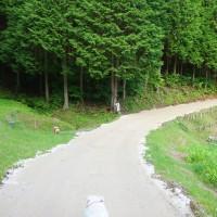 NEWお散歩コース