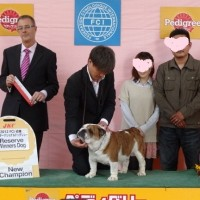 FCI近畿インターナショナルドッグショーに行って来ました