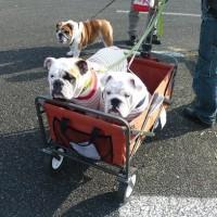 サンビーチ日光川ドッグショーへ行ってきました♪