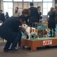 FCI中部インターナショナルドッグショー