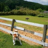 牧場に遊びに行きました(*´◡`*)