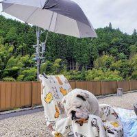 日傘つけてみました♡